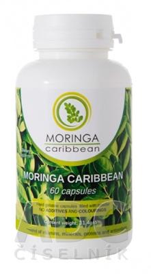 MORINGA Moringa Caribbean (standard)